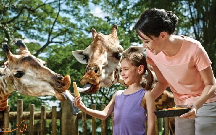 تجربه ای متفاوت در باغ وحش سنگاپور