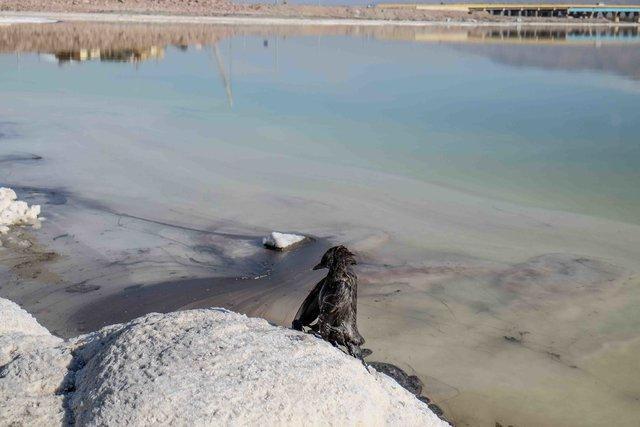 مردم، اصلی ترین عامل در احیای دریاچه ارومیه