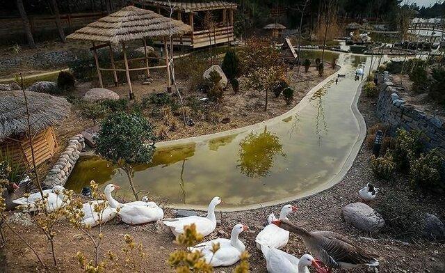 تداوم تعطیلی باغ پرندگان و بوستان های جنگلی منطقه چهار تا اطلاع ثانوی