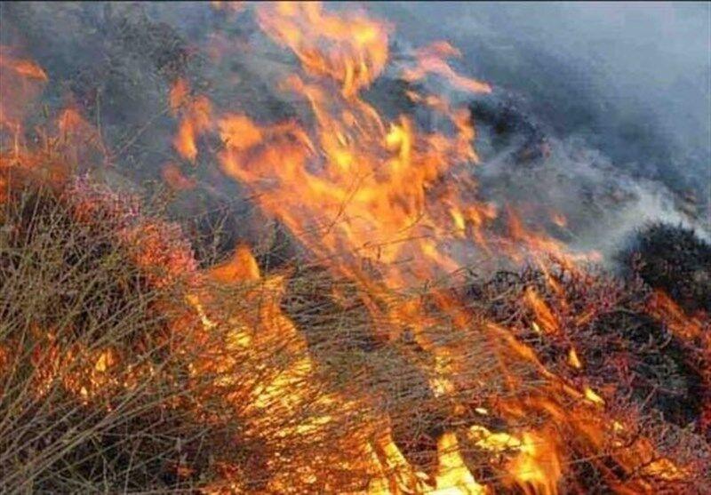 خبرنگاران 95 درصد علت آتش سوزی مراتع و جنگل ها عامل انسانی است