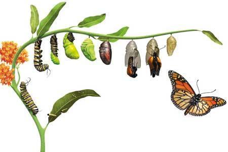 چرا حشرات این قدر زیادند؟