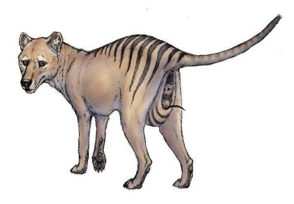 حیوانات منقرض شده در 100 سال اخیر