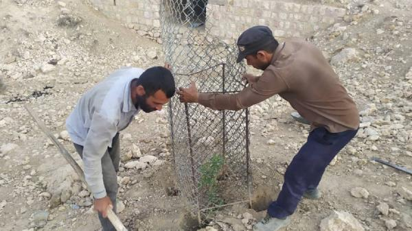 دوستداران محیط زیست در کنار آبشخورهای جم درخت کاشتند